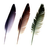 Three feathers. Isolated on a white background Royalty Free Stock Photo