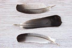 Three feathers Royalty Free Stock Photos