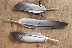 Three feathers. On wooden background Royalty Free Stock Photo