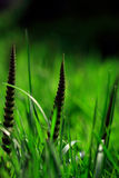 Three ferns. In the grass Stock Photo