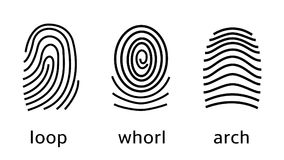 Three fingerprint types on white background. Loop, whorl, arch patterns. Vector illustration. For advertising, security, prints, web design identification Royalty Free Stock Photos