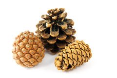Three fir cones on white Royalty Free Stock Photography