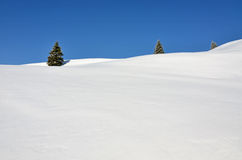 Free Three Fir Trees On Snowy Hills Royalty Free Stock Images - 23525549