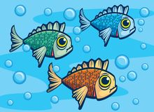 Three Fish. Three different color fish underwater Stock Photos