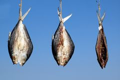 Three Fish Drying in the Sun Stock Image