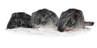 Three fish heads Royalty Free Stock Photography