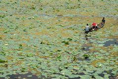 Three fishermen on Dal lake, Srinagar, India Stock Image