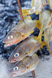 Three fishes to cook Royalty Free Stock Photo