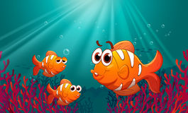 Three fishes under the sea with corals Royalty Free Stock Images
