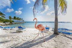 Three flamingos on the beach Stock Images