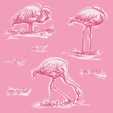 Three flamingos on pink background Stock Photography