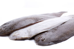 Three flat fish Royalty Free Stock Photography