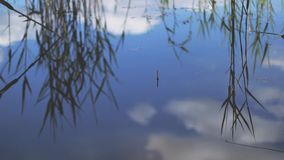Three float next to the rods. stock footage