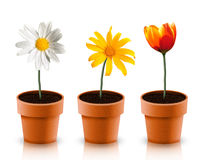 Three flower. Difference three flower in three pot royalty free illustration