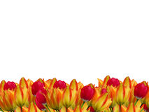 Three flower border Royalty Free Stock Images