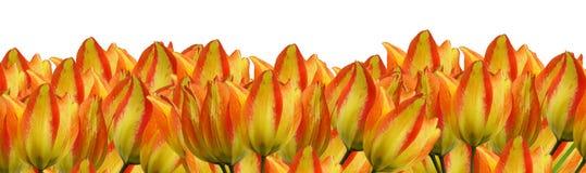 Three flower border pieces Royalty Free Stock Photo