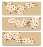 Three flower branch banners. Royalty Free Stock Photos