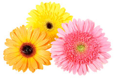 Three flower with dew Stock Photos