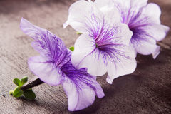 Three Flower Stock Images