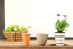 Three Flower Pots in a Row Stock Image