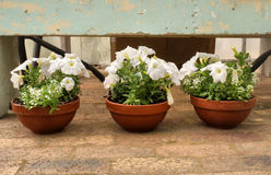 Three flower pots Royalty Free Stock Photography