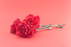 Three flower, red carnations on red background. Holiday backgrou Royalty Free Stock Images