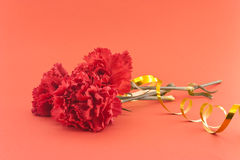 Three flower, red carnations on red background Stock Photos