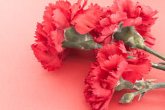 Three flower, red carnations on red background Royalty Free Stock Photo