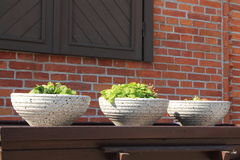 Three flowerpots Stock Image