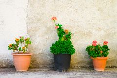 Three flowerpots outdoor Royalty Free Stock Photos