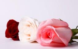 Three flowers Stock Image