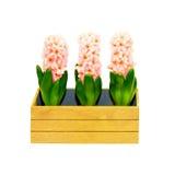 Three flowers Stock Photos