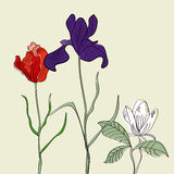 Three flowers. Universal template for greeting card, web page, background Stock Photo