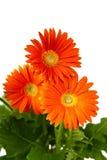 Three Flowers Royalty Free Stock Photo