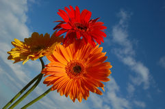 Three flowers. Against the sky Stock Photography