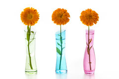 Three Flowers Royalty Free Stock Photography