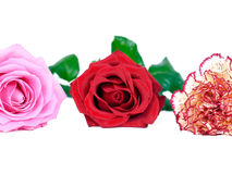 Three flowers Royalty Free Stock Image