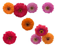 Three flowers. Isolated flowers on the white background stock illustration
