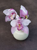 Three flowers of an orchid in a small ceramic vase on a brown ba Stock Image