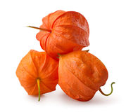 Three flowers of physalis Stock Images