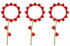 Three flowers from red hearts Stock Photos