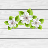 Three flowers on wooden background Royalty Free Stock Image