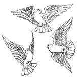 Three flying doves sketch set.Vector illustration Stock Photo