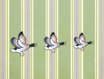 Three flying ducks on old wall Stock Image