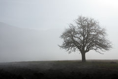 Three in the fog Royalty Free Stock Photos