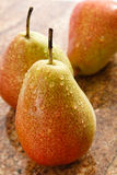 Three Forelle Pears Royalty Free Stock Image