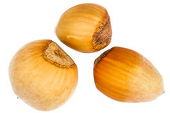 Three forest hazelnuts Stock Images