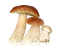 Three forest mushrooms, on a white background Royalty Free Stock Photos