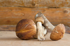 Three forest mushrooms in a wooden wall. On a wooden surface Royalty Free Stock Photo
