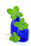 Three Four-leaved clovers. In Cobalt Blue bottles isolated on white Stock Photo